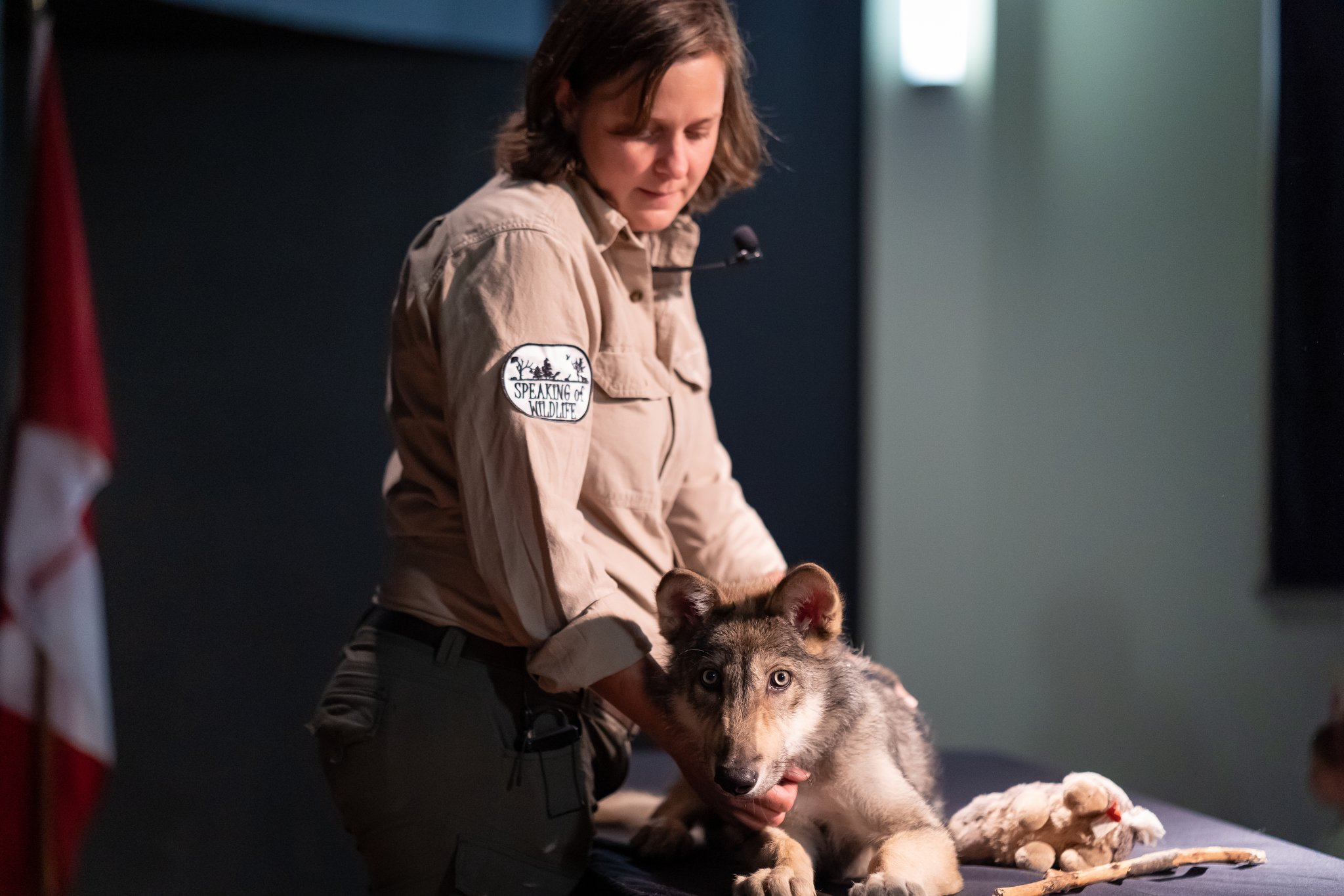 photo of speaking of wildlife with a wolf cub