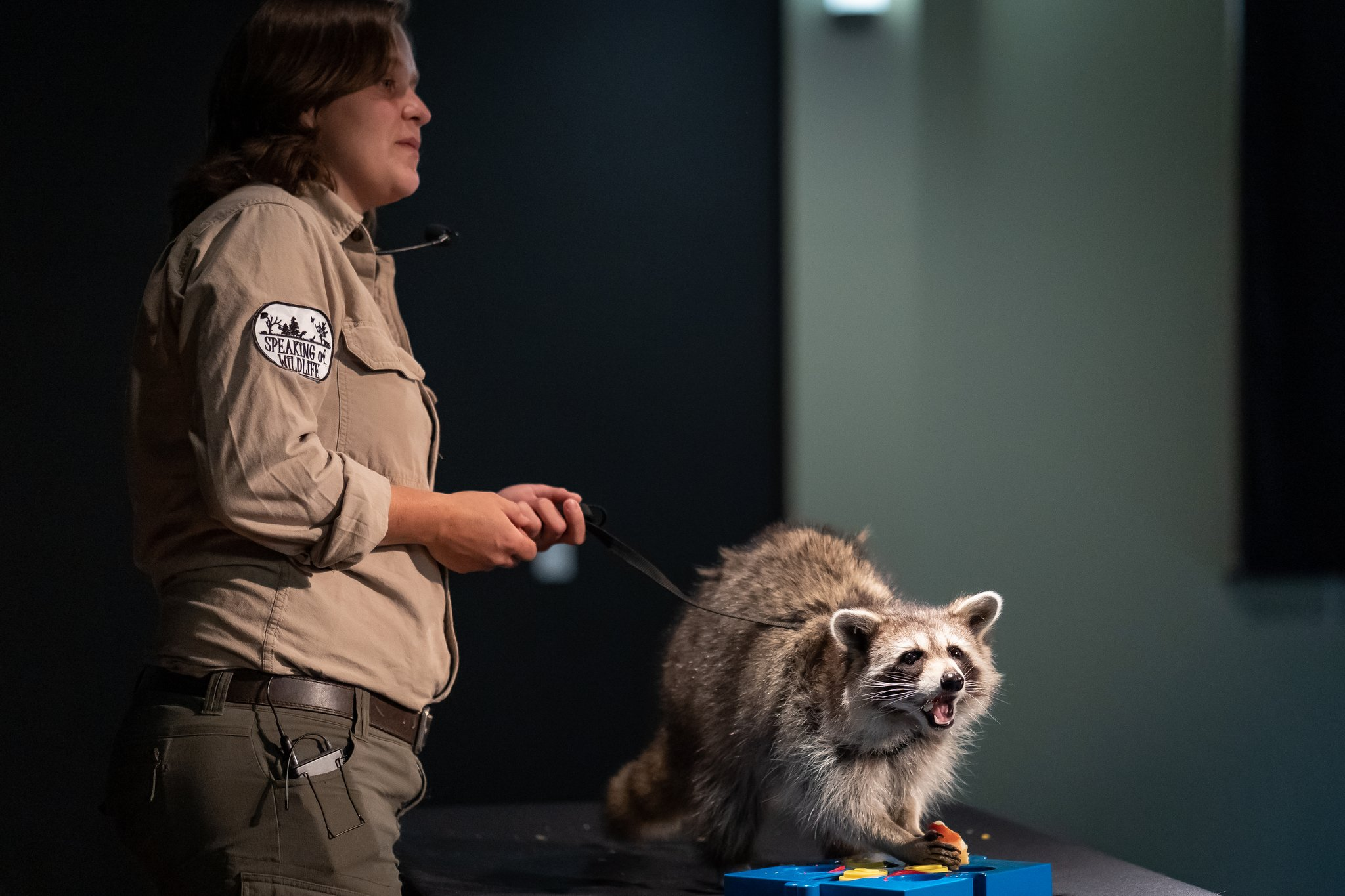 photo of speaking of wildlife with a racoon